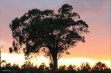drzewo i zachód słońca