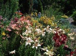 Lato w naszym ogrodzie